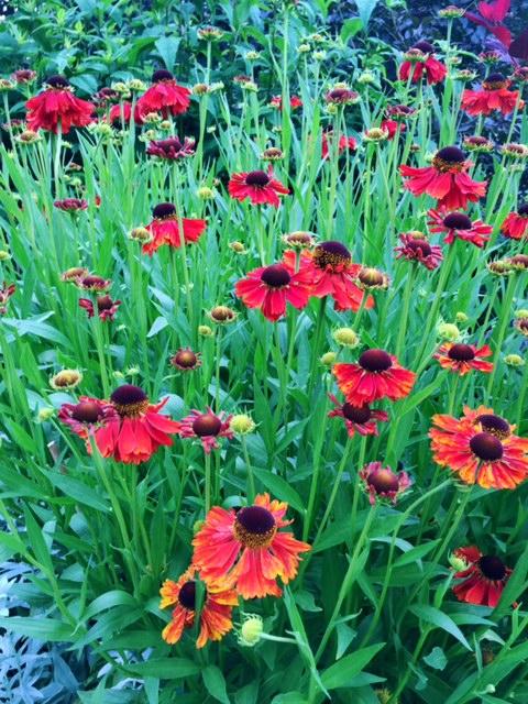 Blomsterprakt i Göteborgs botaniska trädgård, The Archives Podcast avsnitt 9